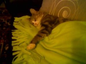 Olivia tar seg en liten middagslur på sofaen til forverten sin