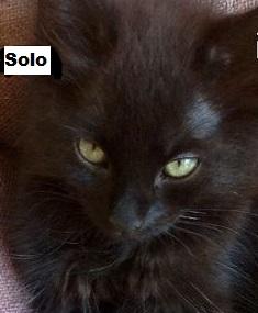 Hannkatten Solo, snart 3 måneder