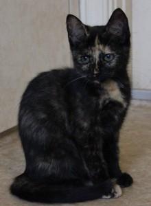 Lille pusefrøken Vinga, rundt 3 måneder gammel